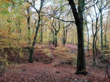 Rollestone Woods