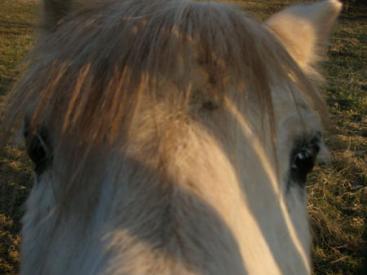 A Pony in Hucknall